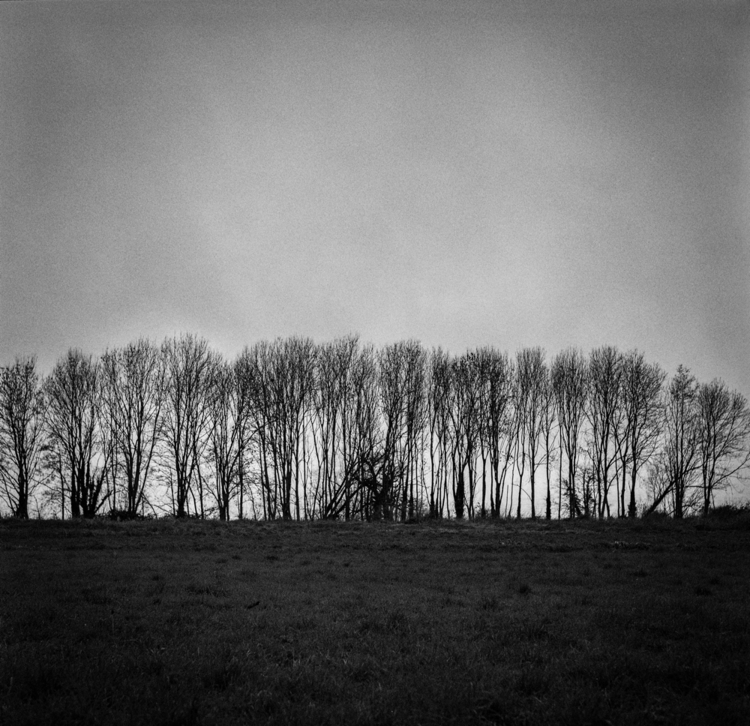 trees b&w.jpg
