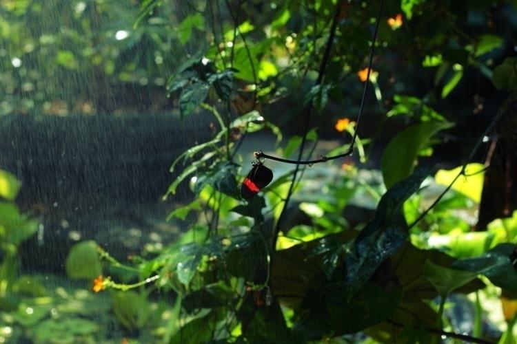 ZooBirdsButterflies_016.JPG