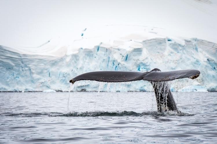 whaletail-1.jpg