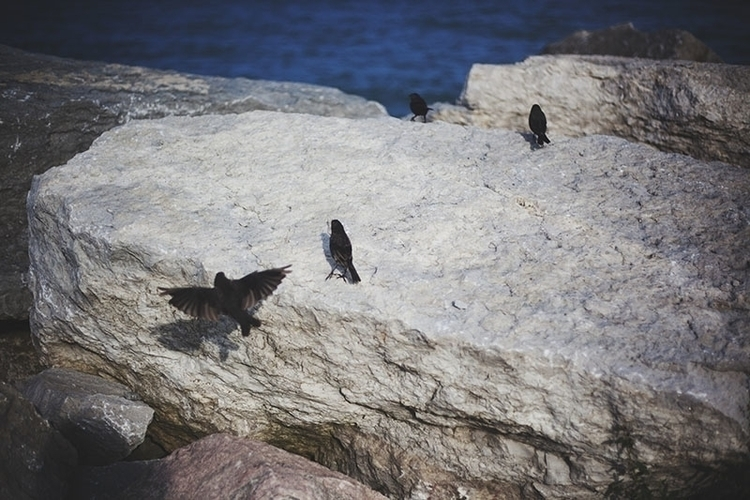birds-playing-on-rock.jpg