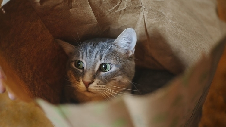 adorable-cat-in-paper-bag-lcbo-elise-and-thomas-blog.jpg