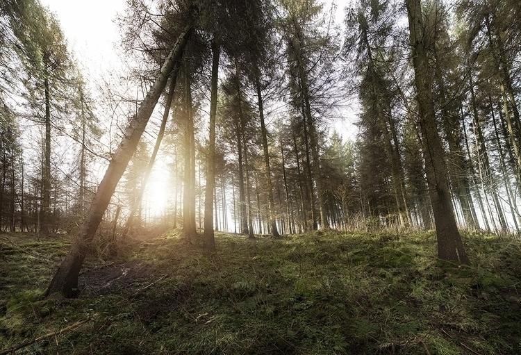 ForestOnline.jpg