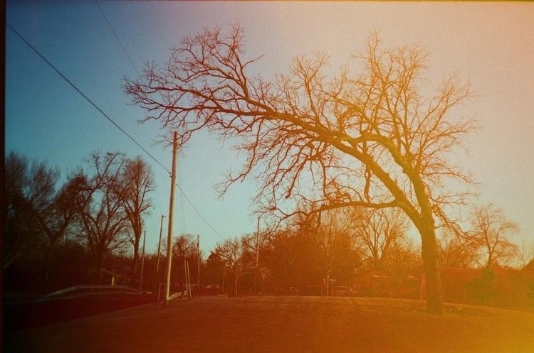 PSfilmrainbowtree.jpg