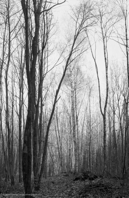 2016-03-18_Wandlitz_Wald_MinoltaXE-1_IlfordHP5_mid.jpg