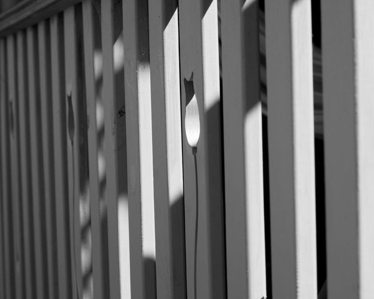 Tullip Fence.jpg