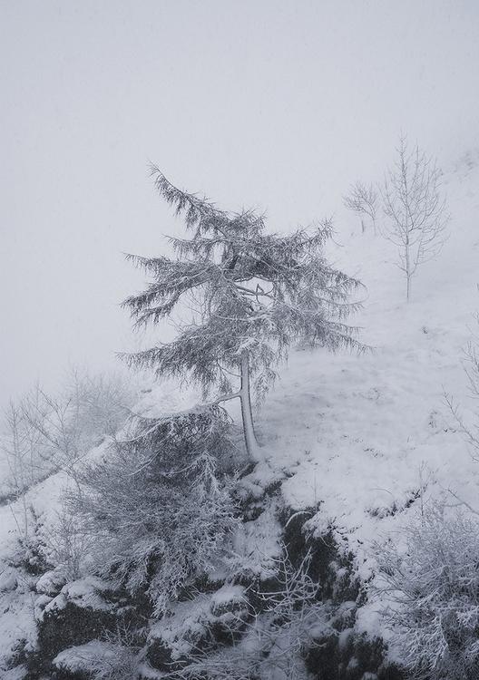 Snow3Online.jpg