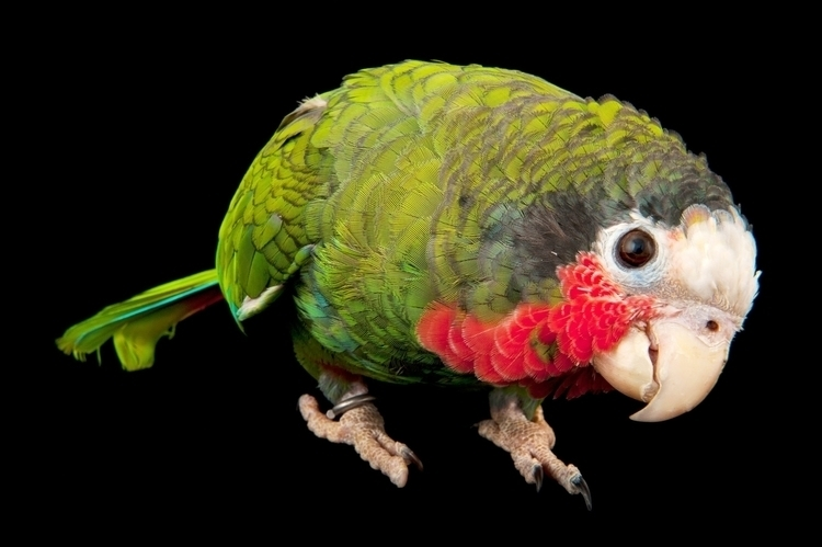 Parrots Are a Lot More Than Pretty Bird 001.jpg