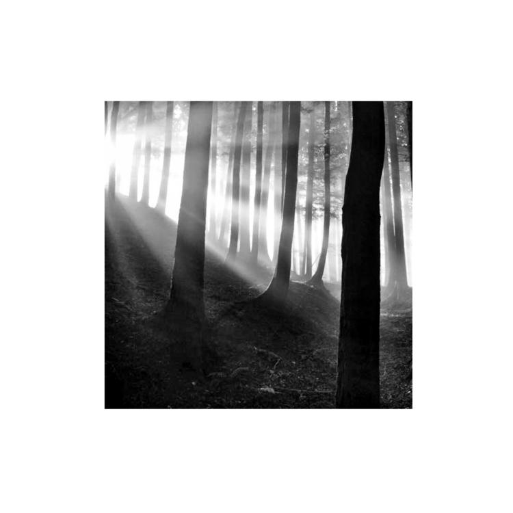 bomen6.1.jpg