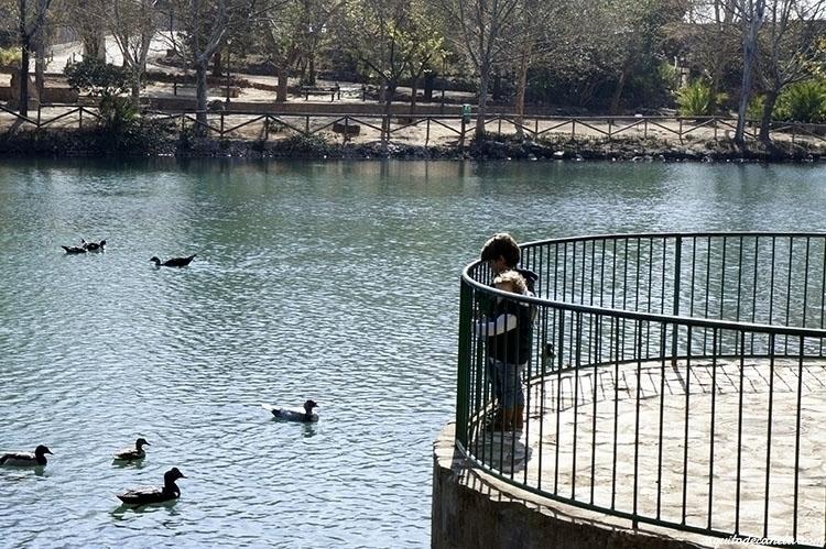 Excursión al Lago de Anna con niños5.jpg