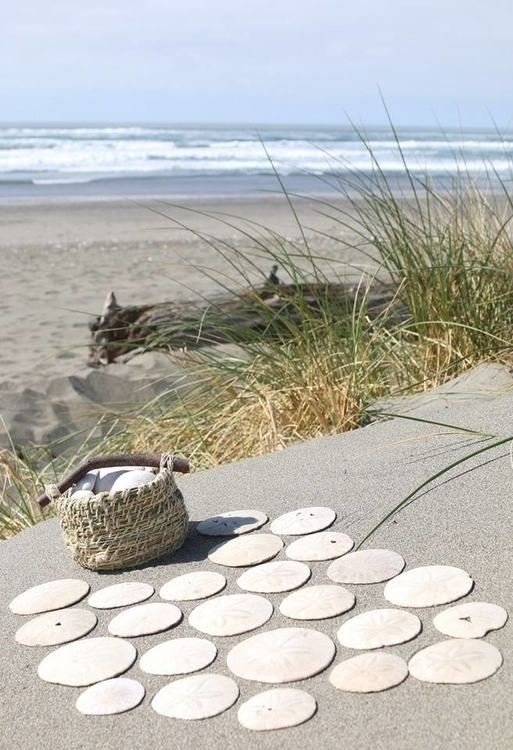 sanddollars and basket.jpg