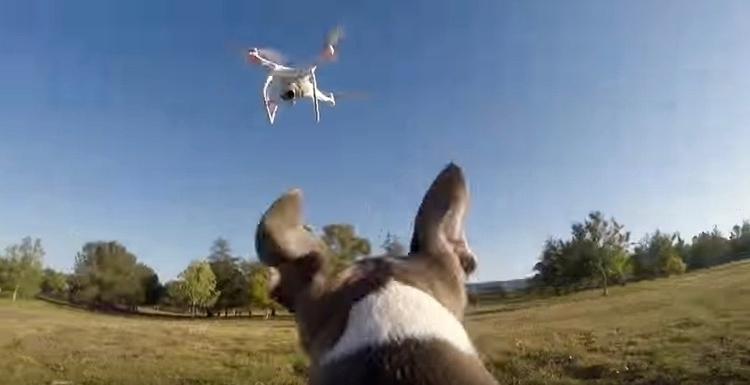 DroneDog1.jpg