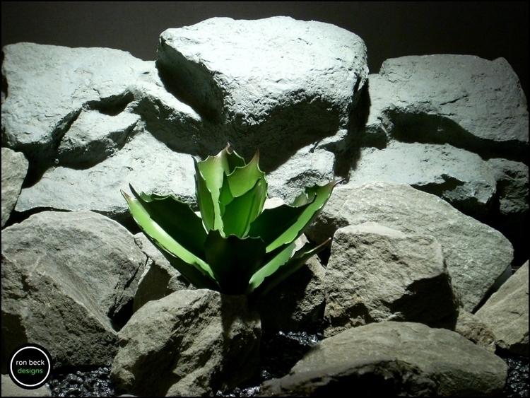 reptile plant: echeveria succul - ronbeckdesigns | ello