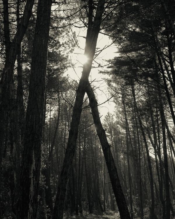 Dark Fable series ellophotograp - andrea | ello