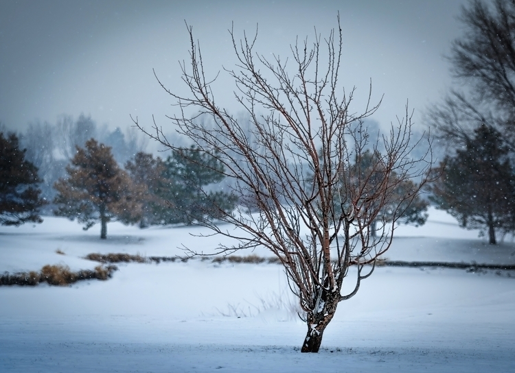 Cold Tree Over Pond A lonely tr - dave_koch | ello