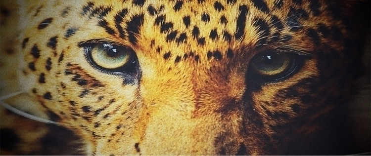 YOUR eyes social media...🎯 soci - socialleopard | ello
