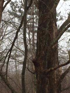 View Cold Swamp. Winter Weeds. - mephit | ello