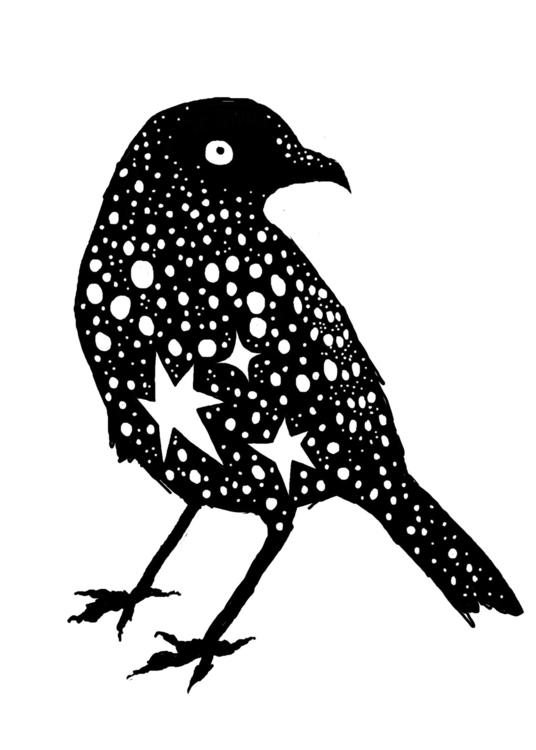 My patronus Bowerbird illustrat - katythezimmerwoman   ello