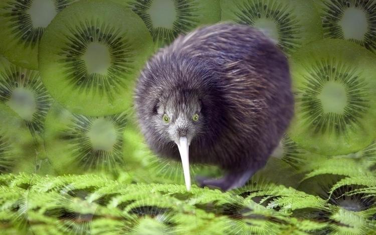 A Kiwi eyes skies wift kiwi - slabra15m | ello