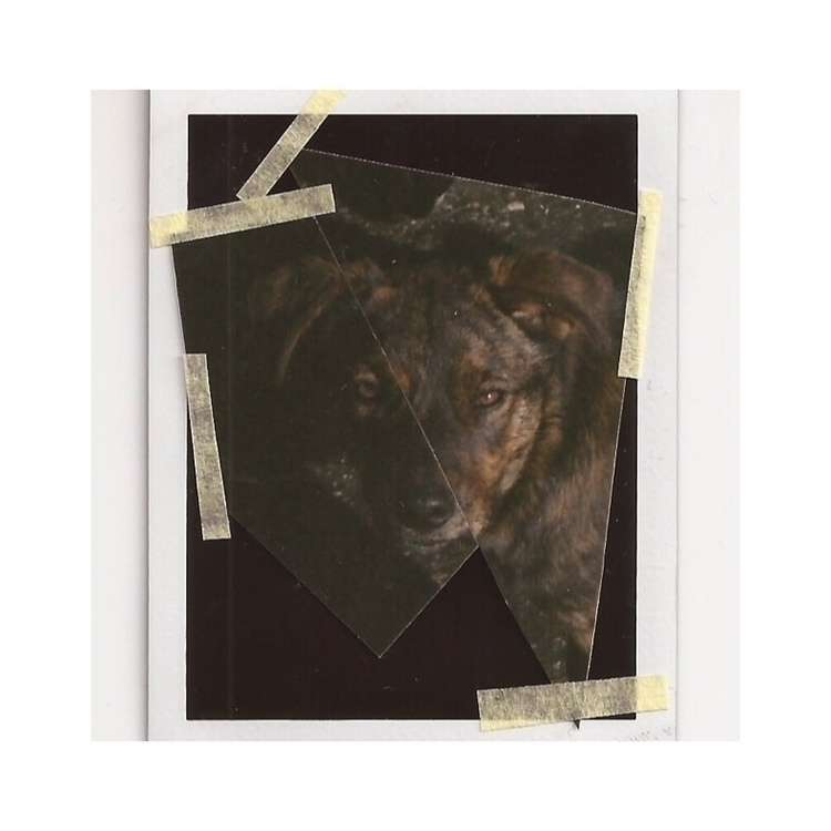 Câine photography 35mm polaroid - sorinacotea | ello