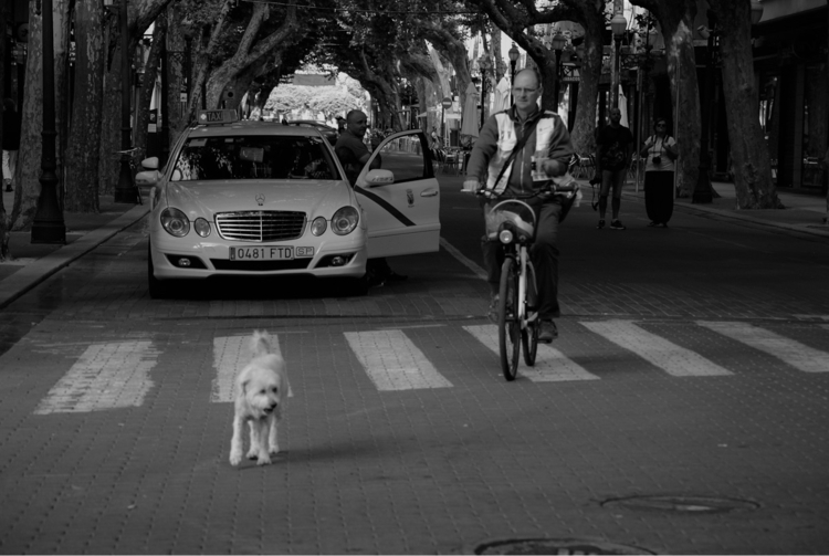 Hi Doggy - myemmo | ello