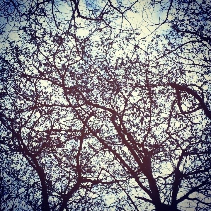 jacksonpollock treescapes janua - skyhighdiamonds | ello