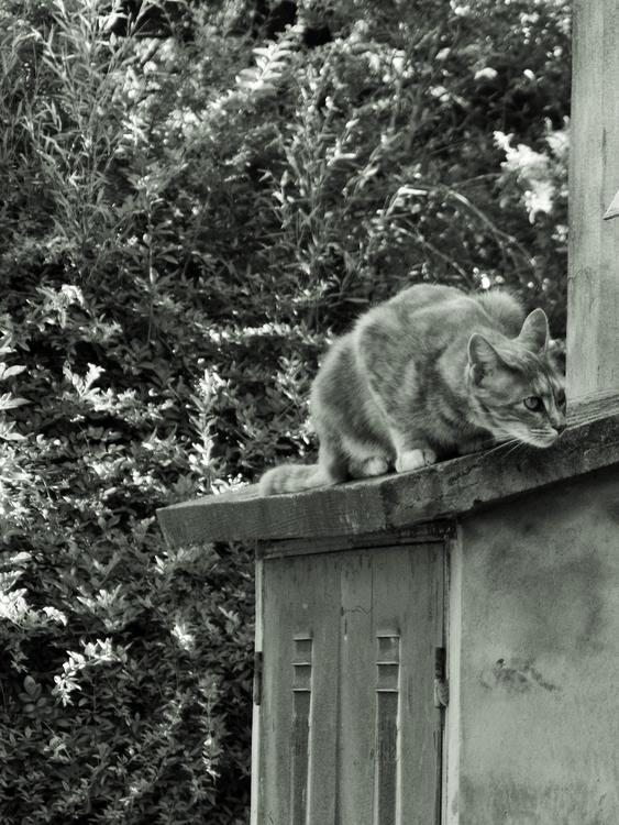 Por los techos gato blancoynegr - mirtanruiz | ello