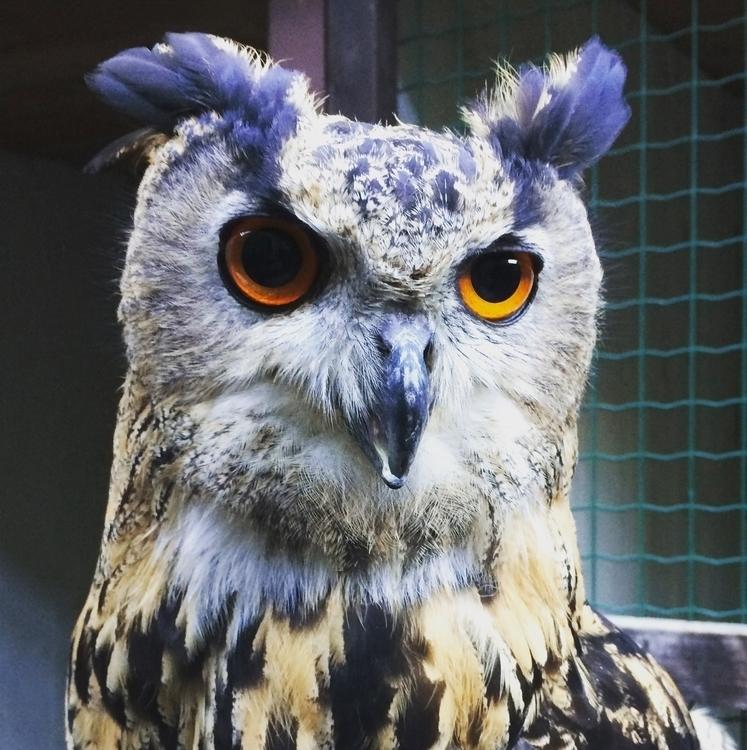 owl - grove | ello