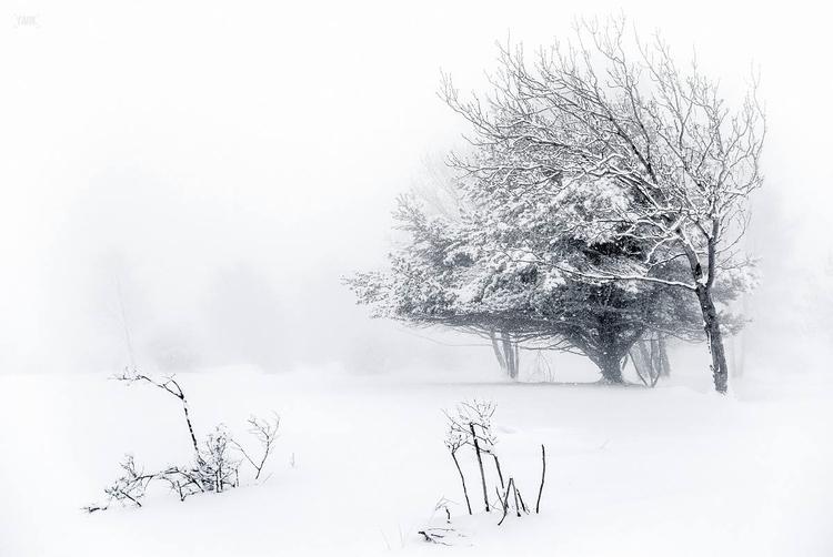 """Resistance"" trees alps winter  - yank- | ello"