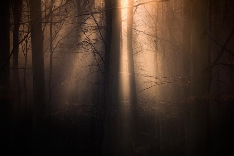 """Happy Lights"" forest light tre - yank- | ello"