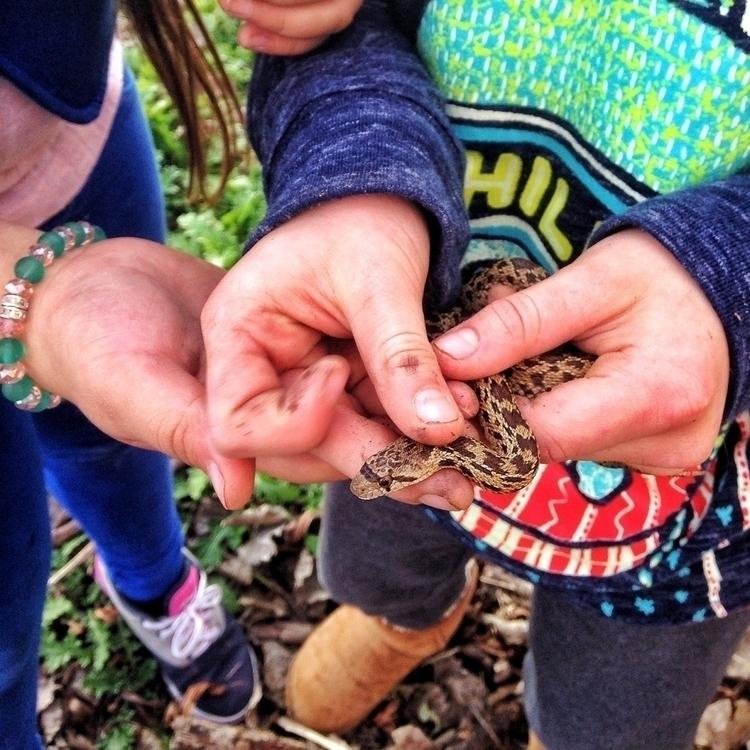 adventures youth snake explorat - hefti3 | ello