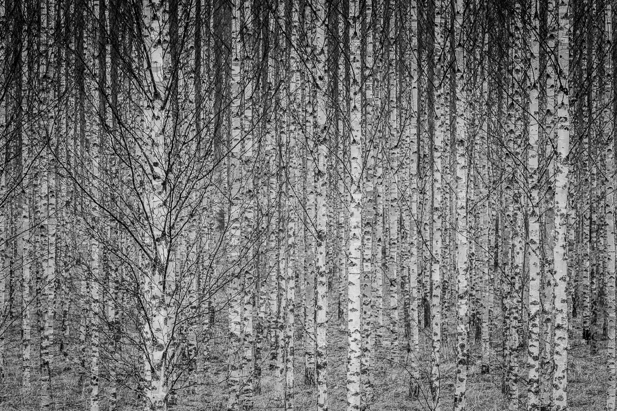 trip woods today, trees ;) natu - peter_skoglund | ello