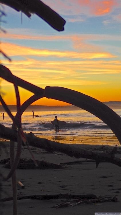 Driftwood sculptures, sunrise s - davemrus | ello