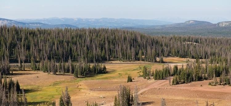 Utah National Forest (Uinta-Was - gallerytx   ello