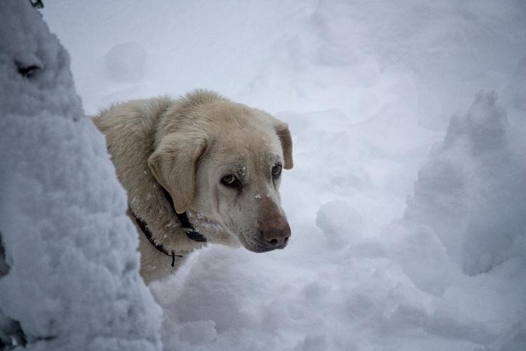 Give Winter! - atrione | ello