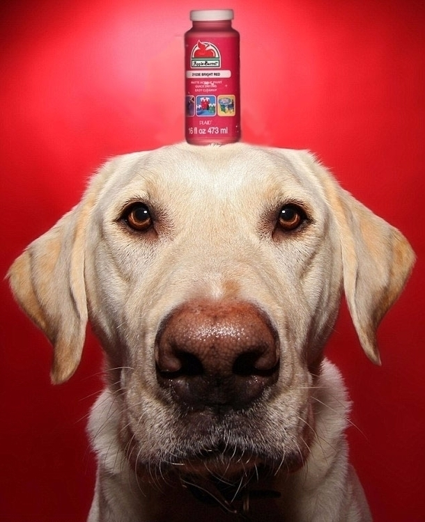 Paint Doggo. 1/31/17 wift - slabra15m   ello