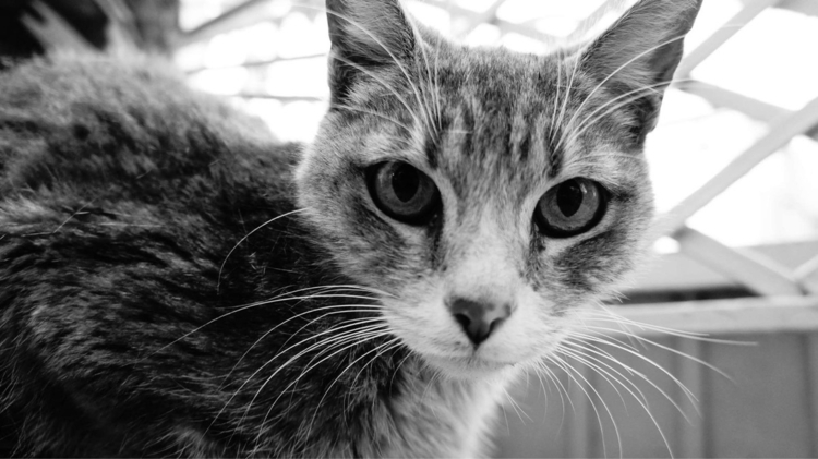 atrapado photography cat Mexico - mystic_siva | ello