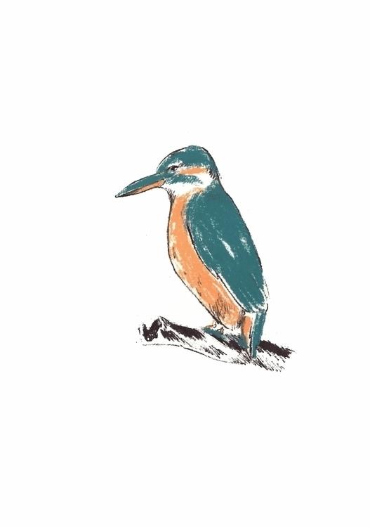 illustration bird. kingfisher s - kvasaiciuke | ello