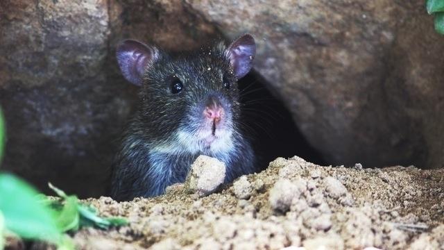 Mandy mouse peeked hole bookcas - writefarmlive | ello