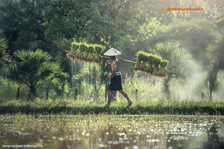 Agriculture Asia darksalahuddin - darksalahuddin | ello