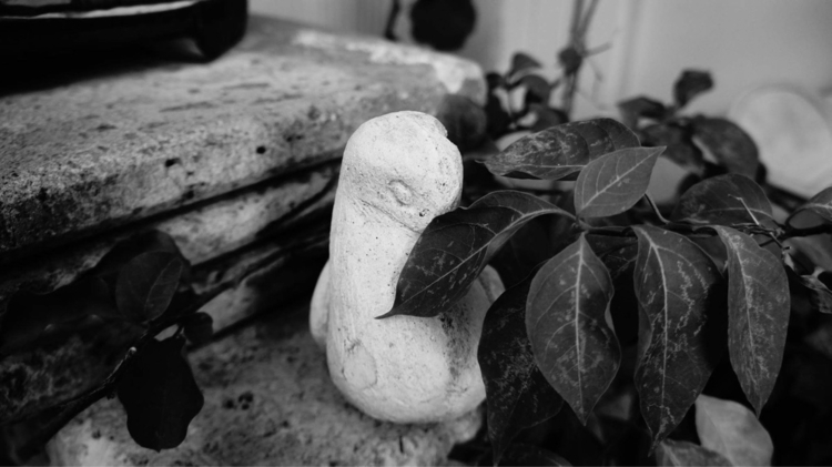 Abuela photography Mexico - mystic_siva | ello