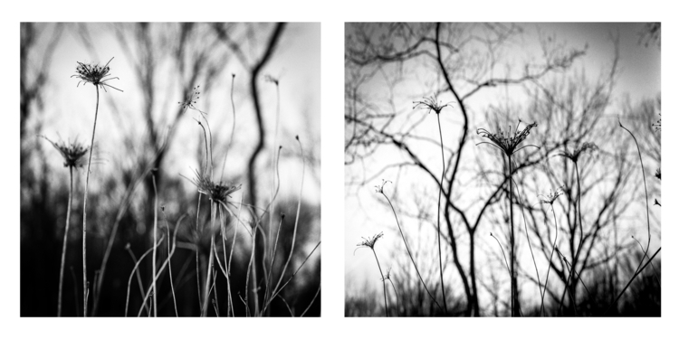 woods summer long mamiya 645 80 - junwin | ello