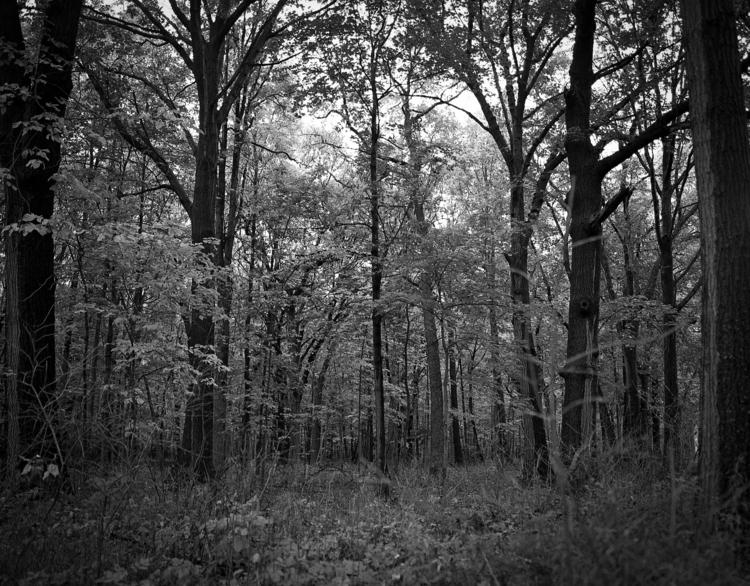 Autumn woods mamiya 645 45mm Il - junwin | ello