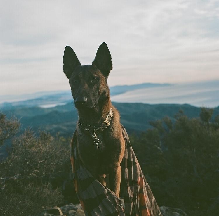 takoda dogphotography hasselbla - teetonka   ello