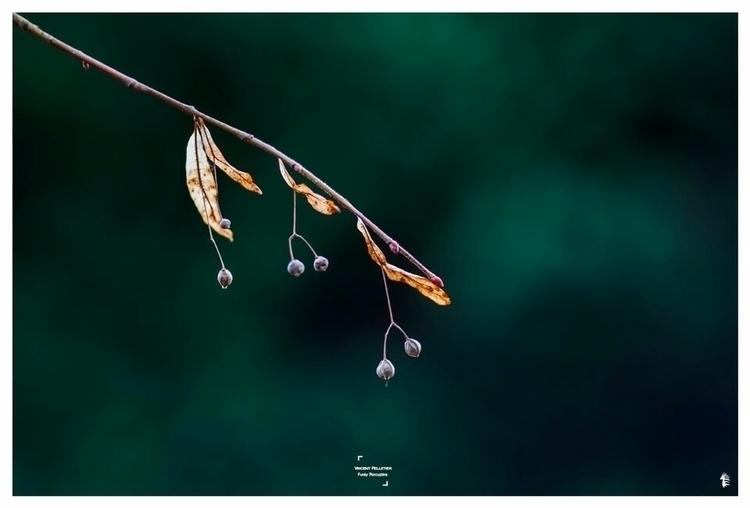Green contrast nature canon#pho - funkyporcupine | ello
