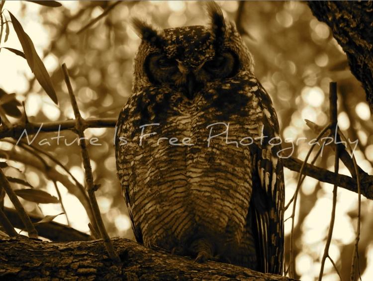 wise owl sat oak spoke heard .  - natureisfree | ello