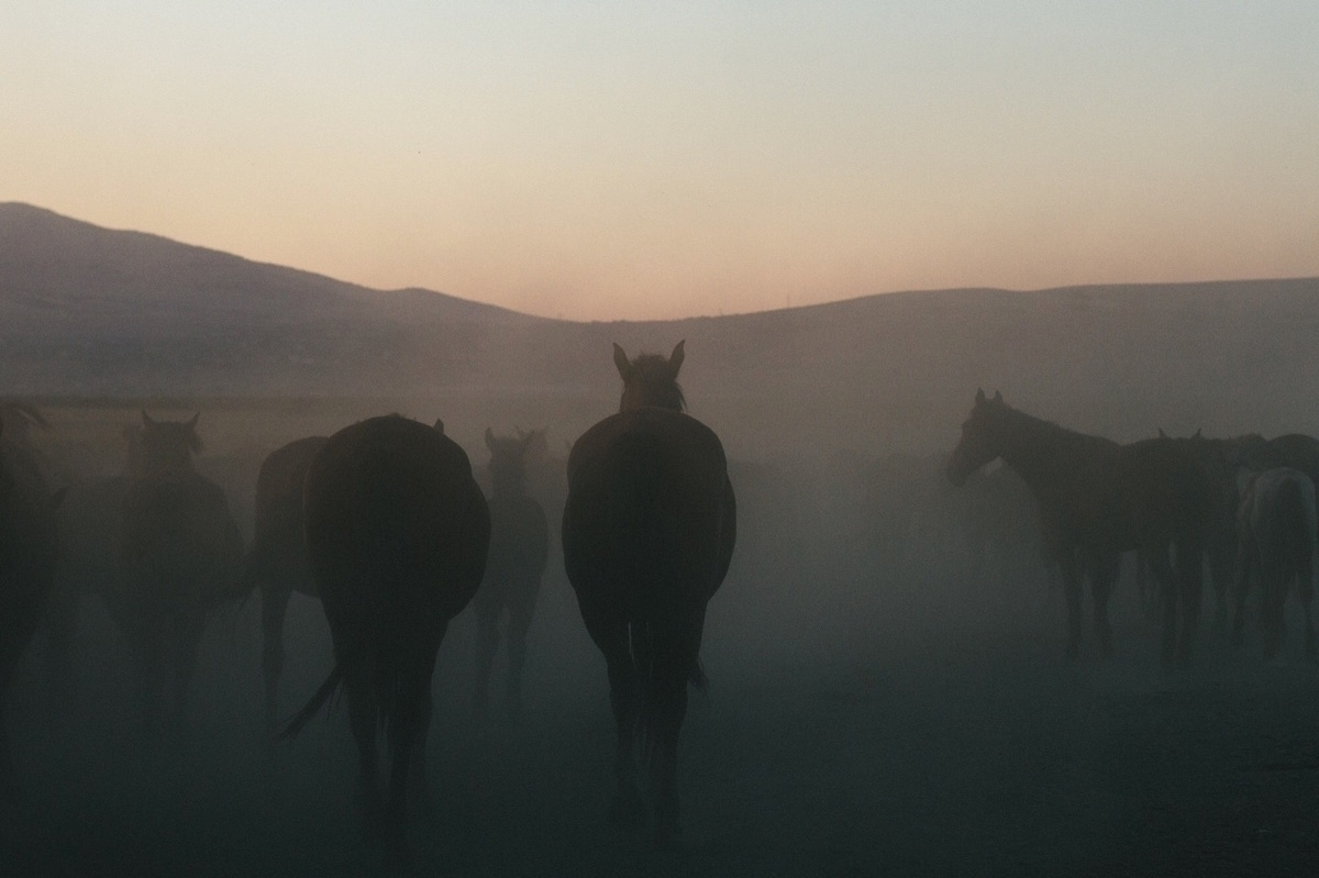 Sunset wild horses Turkey - canagaoglu | ello
