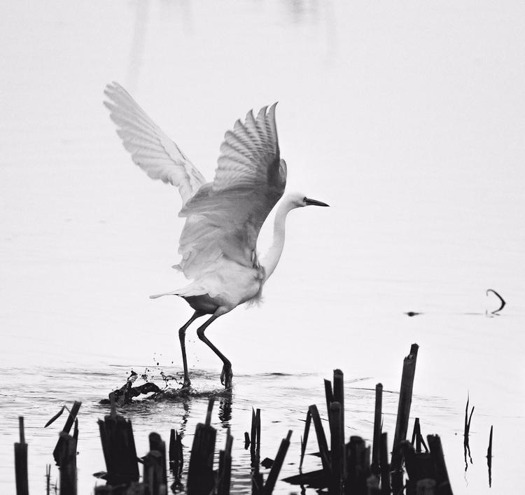 Avian angel - bradverts | ello