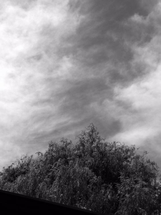 Cielo pintado - blackandwhite, bnw - mirtanruiz   ello