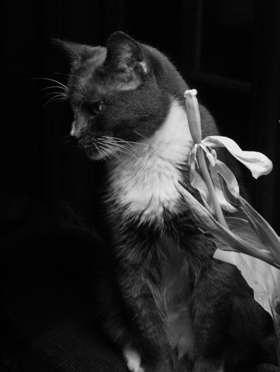 Kitty - jlbtwee | ello