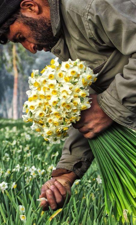 afghan worker Picking Fresh Flo - visitafghanistan | ello